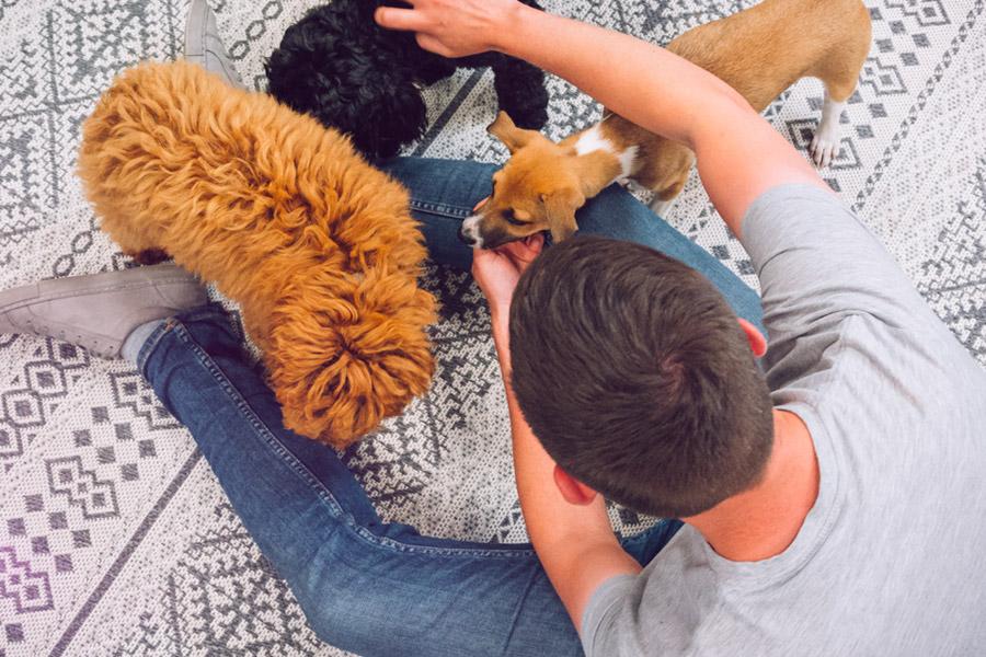 Stroking 3 puppies on the floor