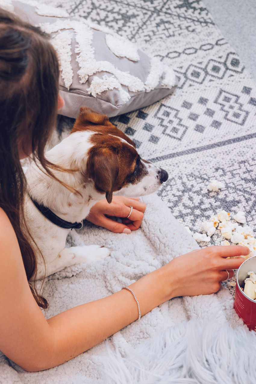 Dog eating popcorn alongside human
