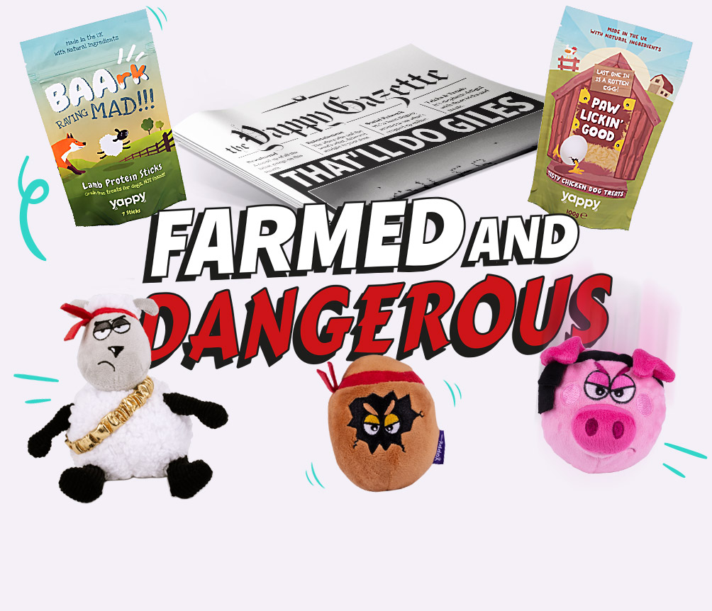 Themed Dog Toys and Treats