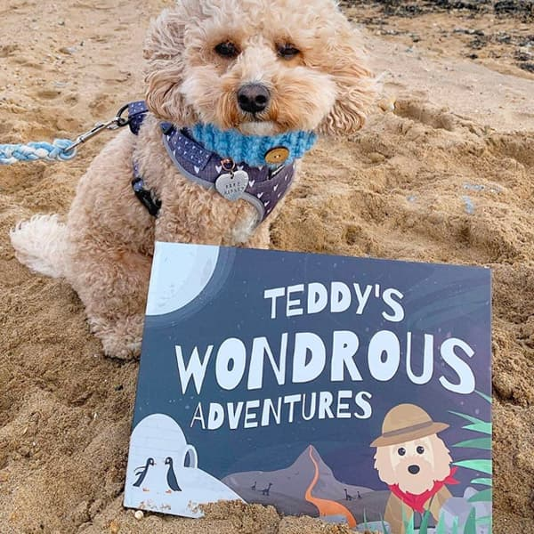 Teddy at the beach with his Personalised Wondrous Book