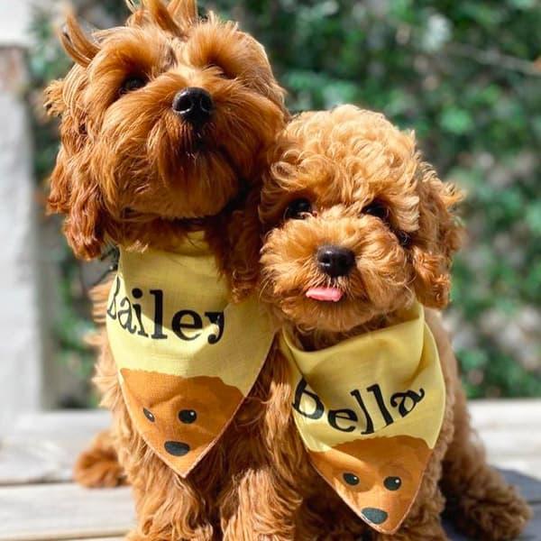 Two dogs wearing Personalised Yappy Bandanas