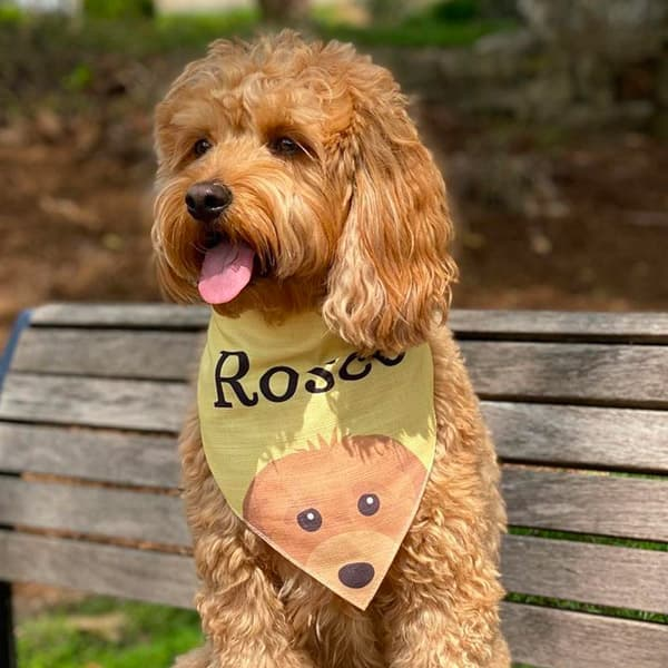 Roscoe sat on a bench wearing a Personalised Yappy Bandana