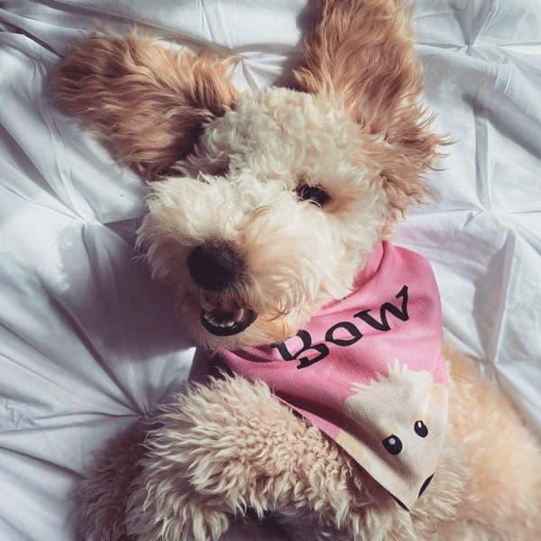 Bow in her Pink Personalised Peeking Bandana
