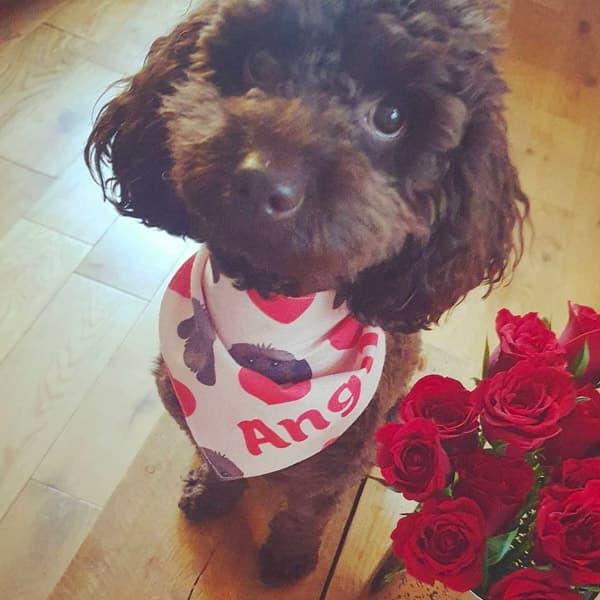 Angus wearing Valentine's bandana