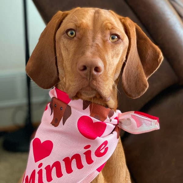 Minnie the Vizsla in her Heart Pattern Bandana