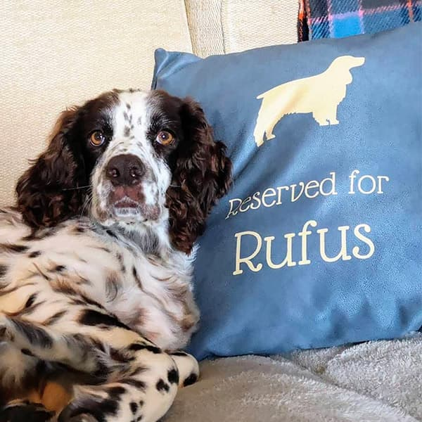 Rufus lay on his Personalised Dog Cushion