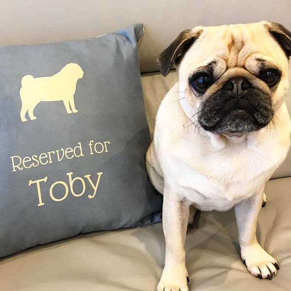 Toby posing next to his Personalised Pug Cushion