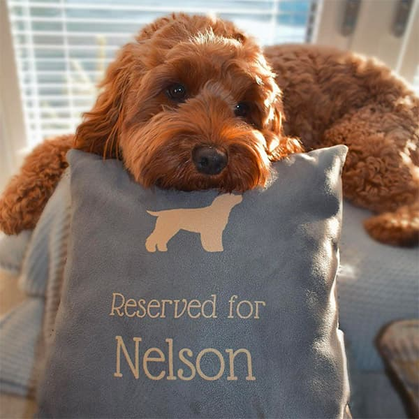 Nelson resting on his Personalised Reserved For Cushion
