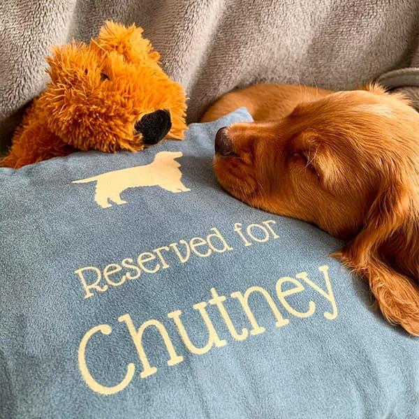 Chutney fast asleep on a Personalised Dog Cushion