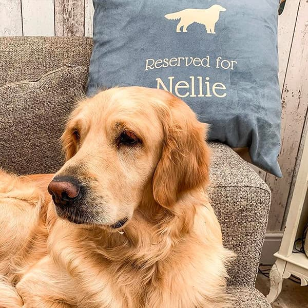 Nellie proudly sitting with her Personalised Cushion
