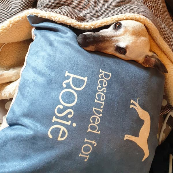 Rosie looking comfortable on her Personalised Silhouette Cushion