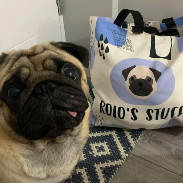 Rolo with his own Personalised Pug Bag