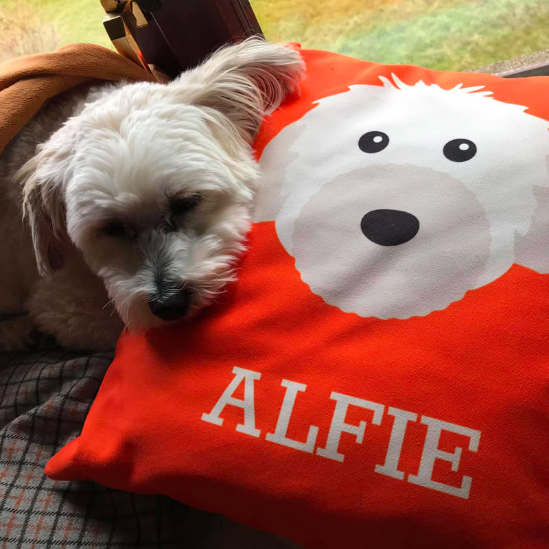 Alfie with his Personalised Yappicon Cushion