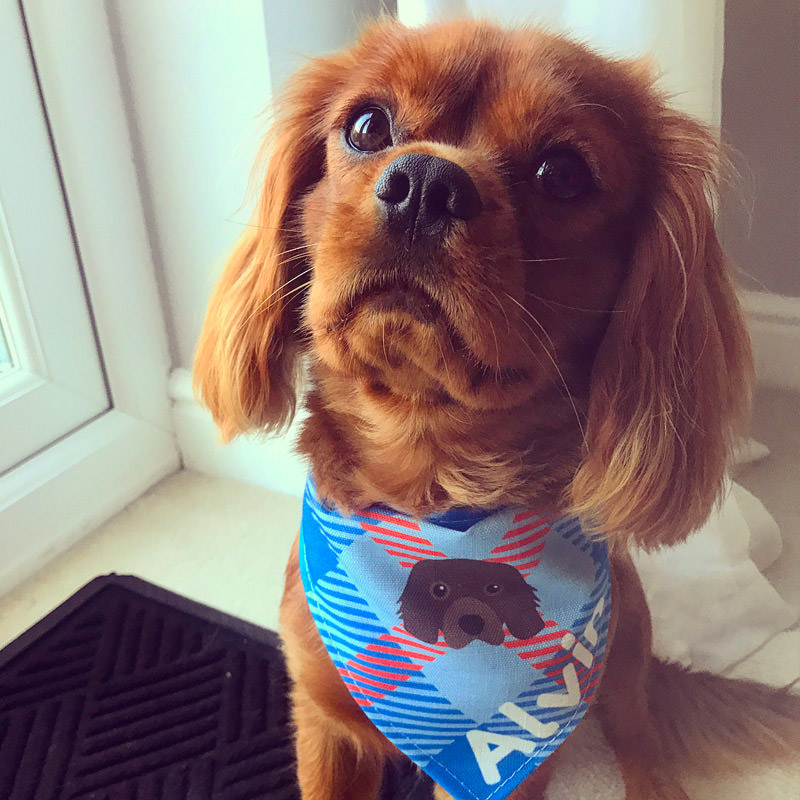 Alvin with his Personalised Tartan Bandana