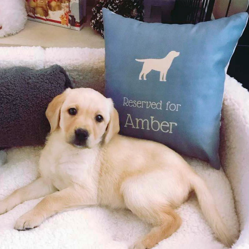 Amber with her Reserved for Cushion