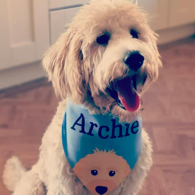 Archie with his Personalised Peeking Yappicon and Name Bandana