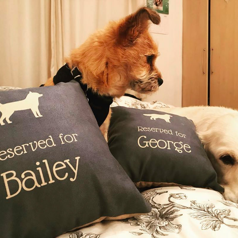 Bailey and George with their Reserved for Cushion