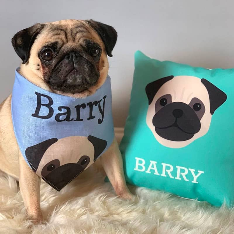 Barry with his Personalised Dog Cushion