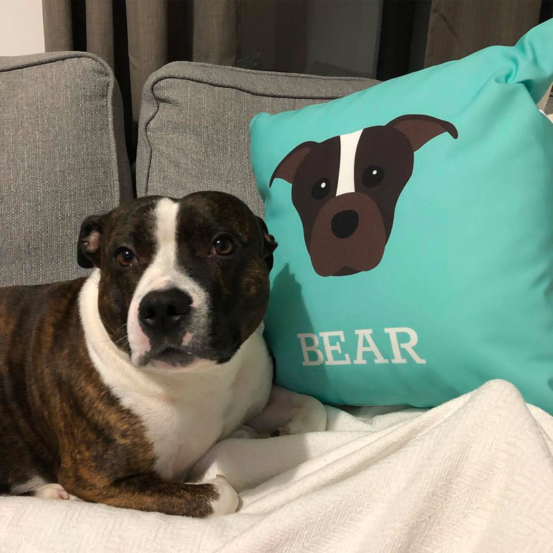 Bear with his Personalised Icon Cushion