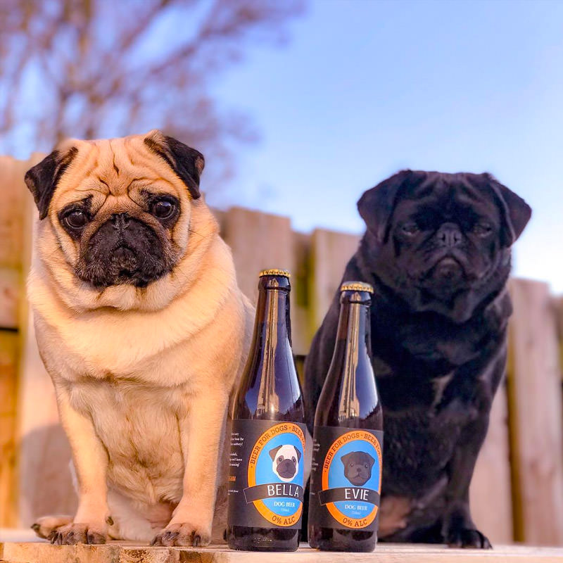 Bella and Evie with their Dog Beer