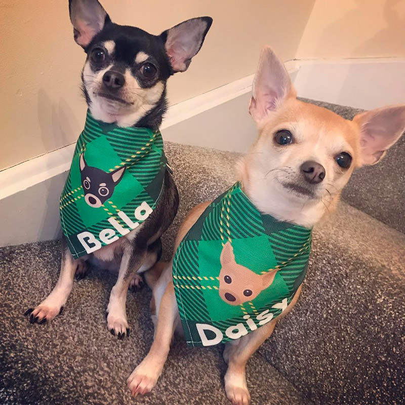 Bella and Daisy with their Personalised Tartan Bandana