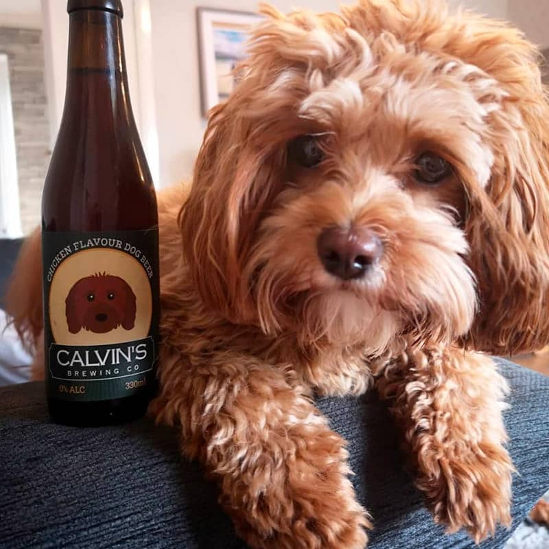 Calvin with his Personalised Dog Beer
