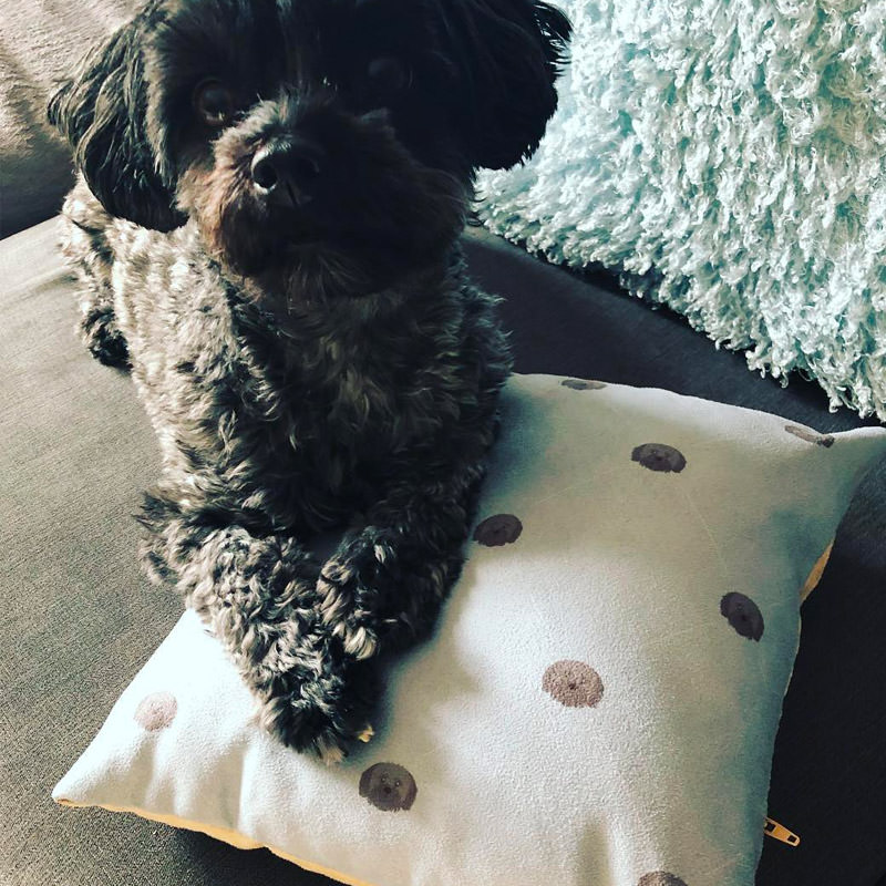 Chester Moodey with his Icon Pattern Cushion