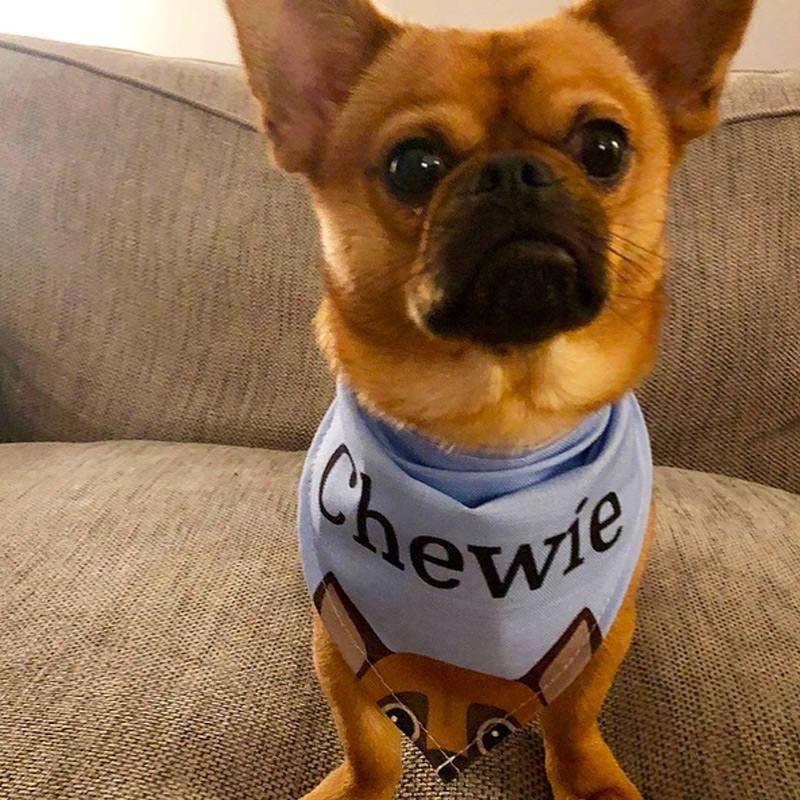 Chewie with his Peeking Bandana