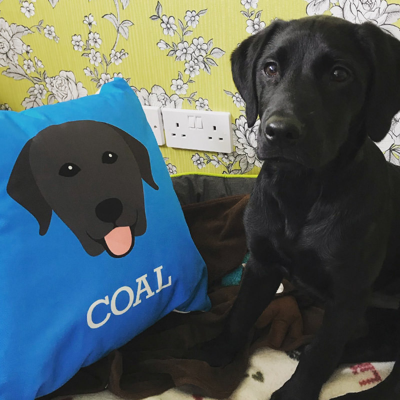 Coal with his Personalised Icon Dog Cushion