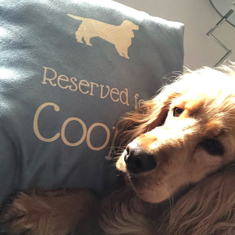 Coops with his Reserved for Cushion