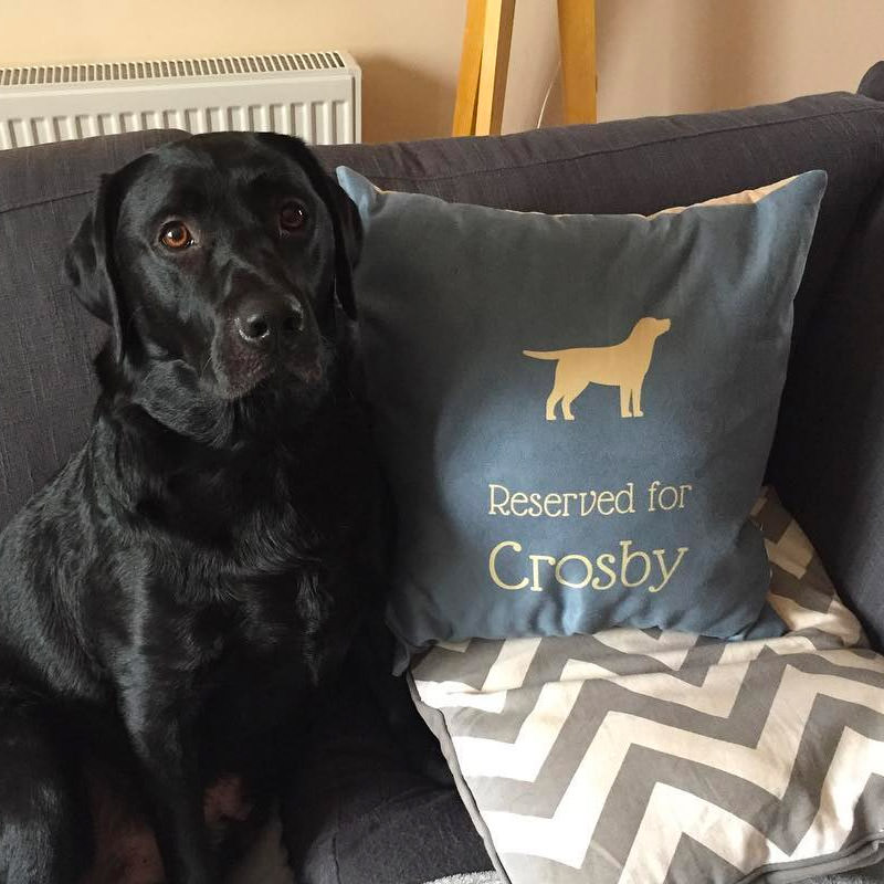 Crosby with his Personalsied Labrador Cushion