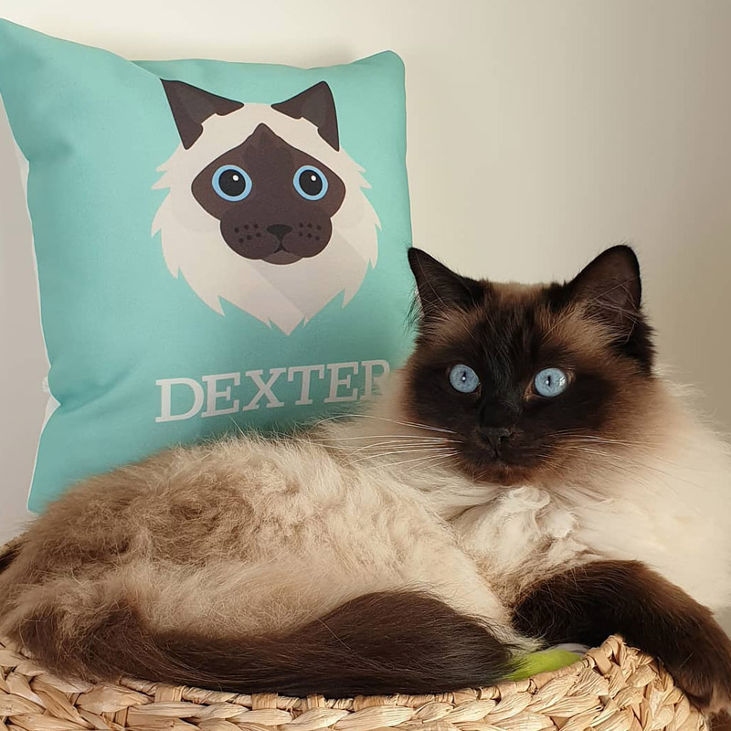 Photo of Dexter with his Yappy Personalised Cushion