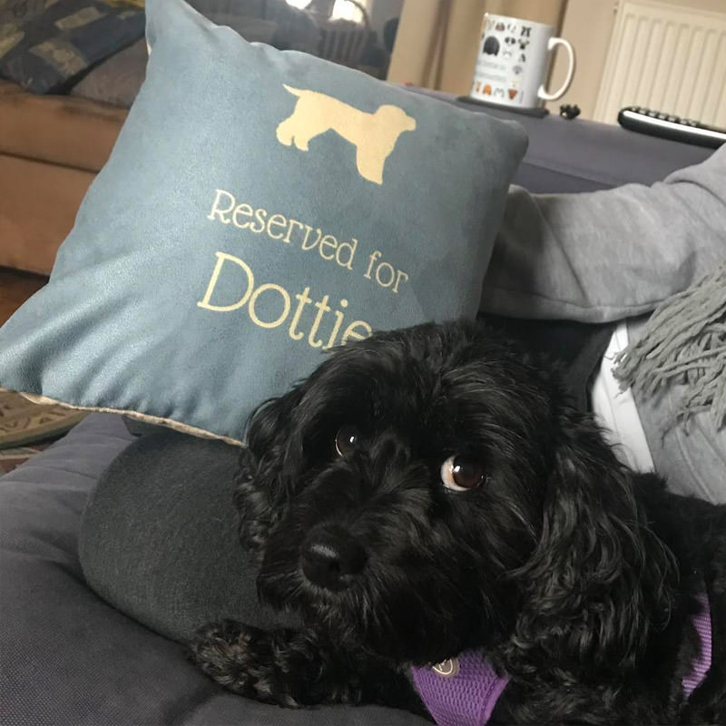 Dottie with her Reserved for Cushion