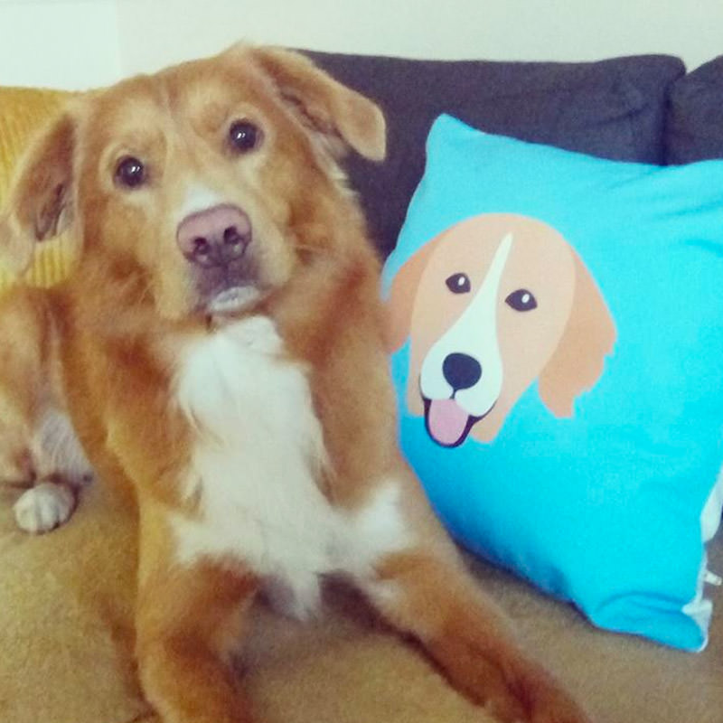 Elmore with his Icon Cushion