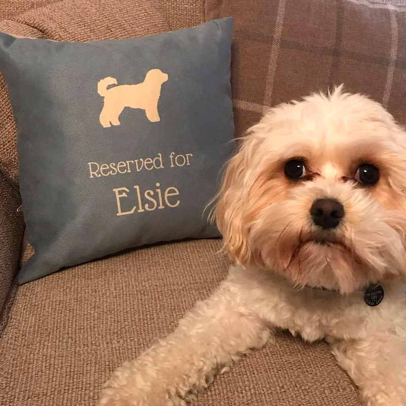 Elsie with her Reserved for Cushion