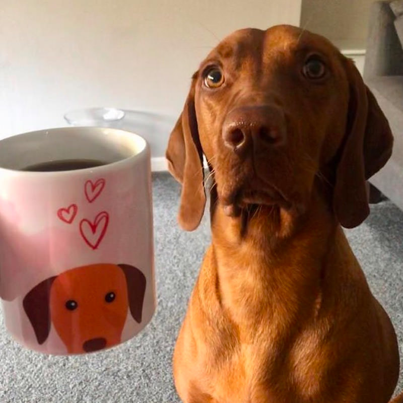 Esmerelda with her Personalised Vizsla Mug