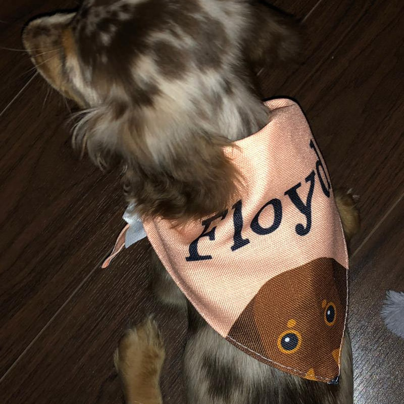 Floyd with his Personalised Name and Yappicon Bandana