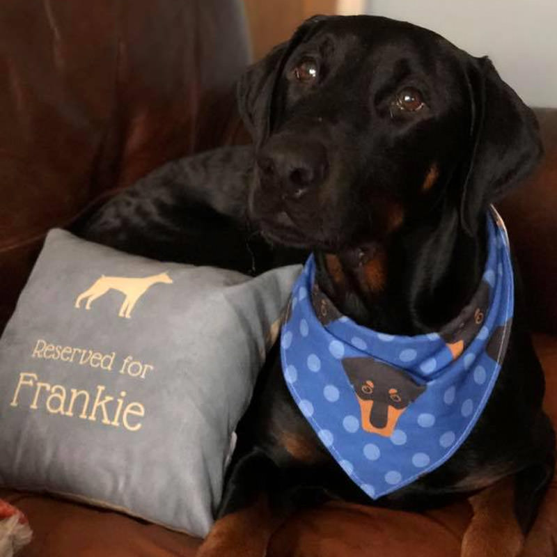 Frankie with his Personalised Cushion and Bandana