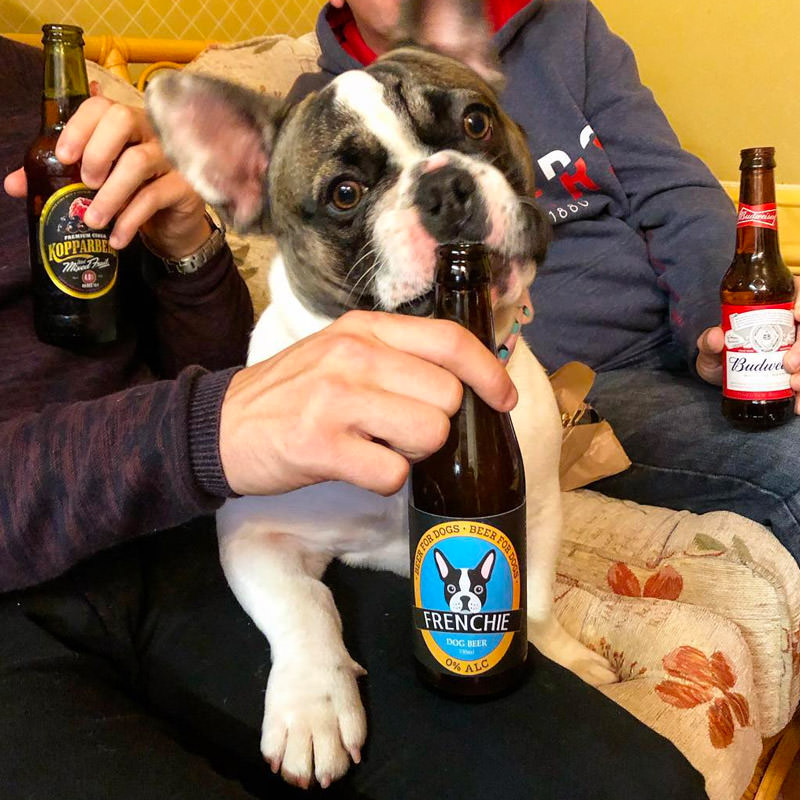 Frenchie with his Beer