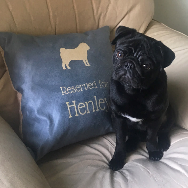 Henley with his Reserved for Cushion