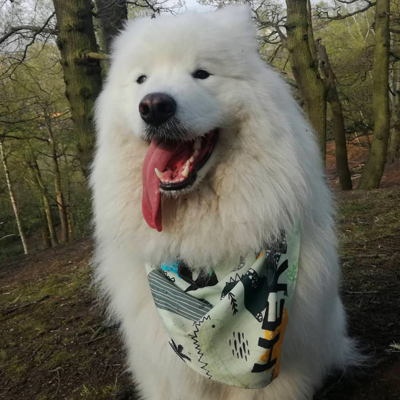 Hermes with her Personalised Name Bandana