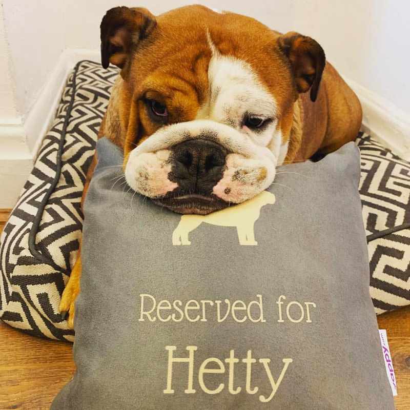 Hetty with her Reserved For Cushion