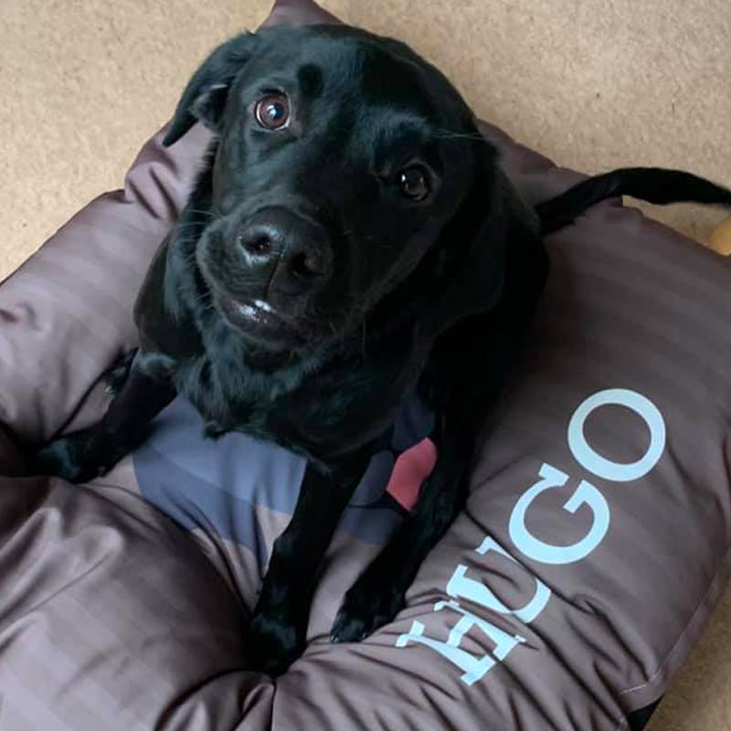 Hugo with his Icon Bed