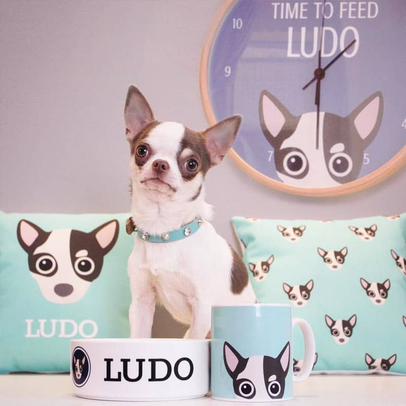 Ludo with her personalised dog gifts