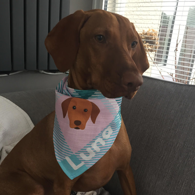 Luna with her Personalised Tartan Bandana