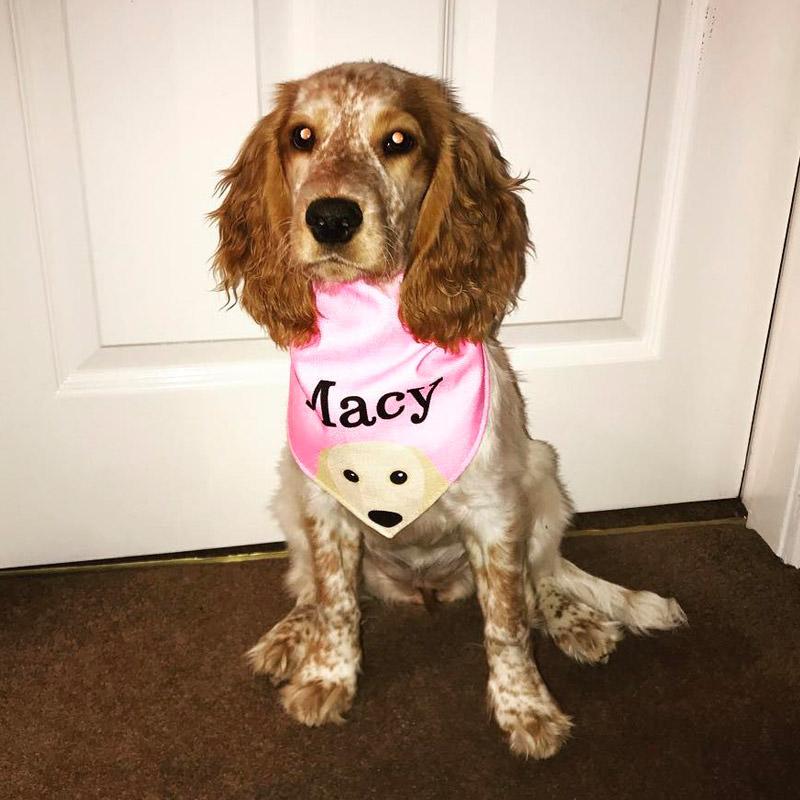Macy in her Personalised Peeking Yappicon Bandana