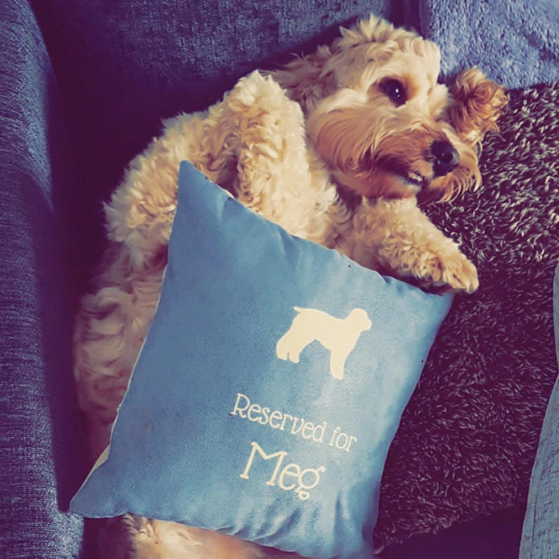 Meg with her Reserved for Cushion
