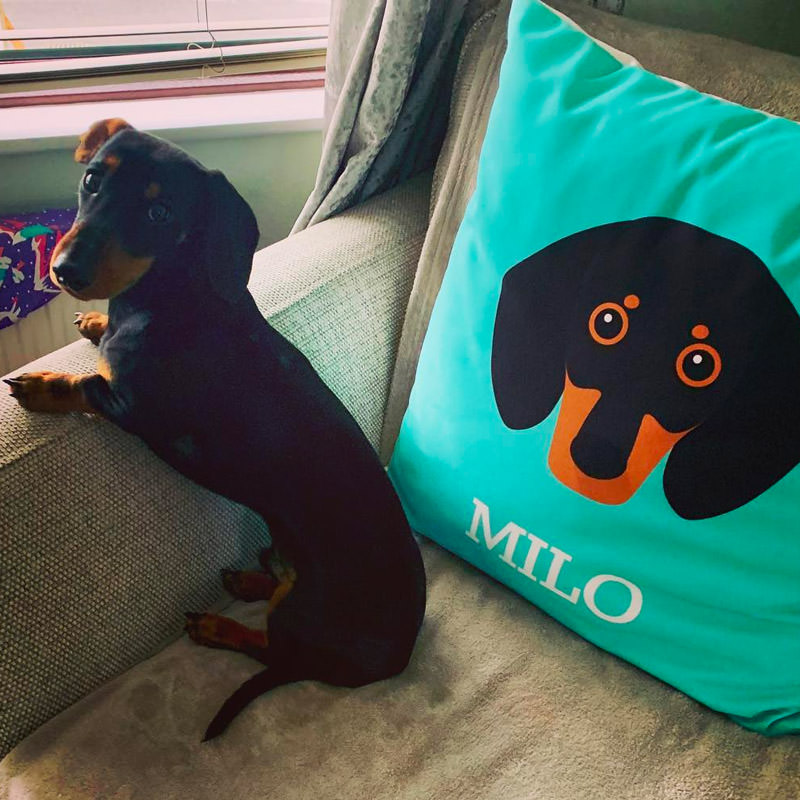 Milo with his Personalised Icon Cushion