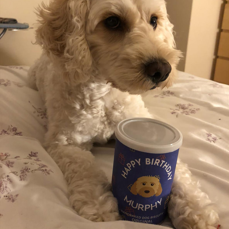 Murphy with his Birthday Biscuits