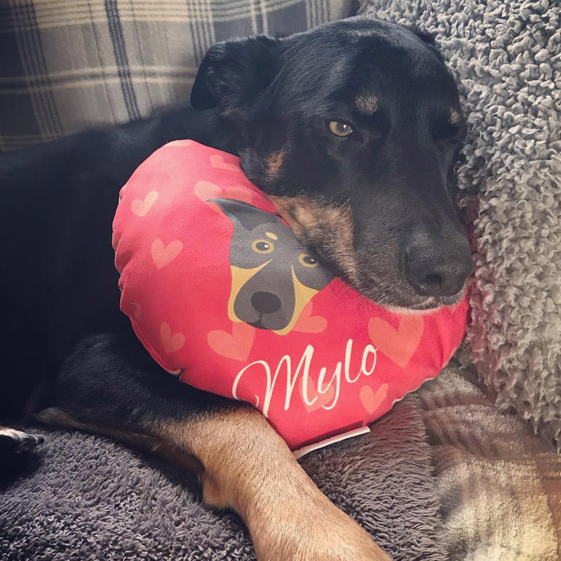 Mylo with his Personalised Heart Shaped Dog Cushion